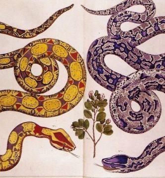 Muestrario colorido de serpientes, por Luisa Futoransky
