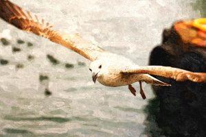Razón de la gaviota, por Marina Tapia