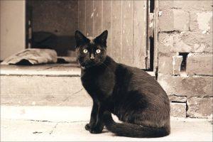 """""""Negro"""" nació en Anhui (hojas desgarradas de un diario), por Wilfredo Carrizales"""