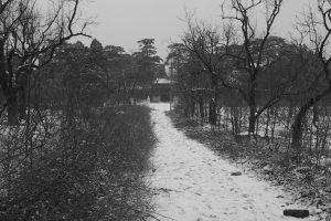 ¿Estaba la nieve descansando o era ya camino?, por Wilfredo Carrizales