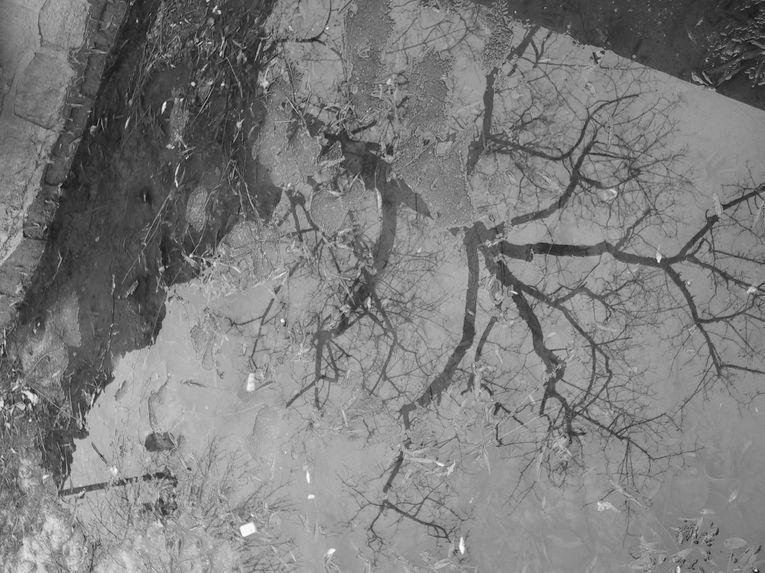 Sólo en los adentros del agua subsisten las imágenes, los espejismos, por Wilfredo Carrizales