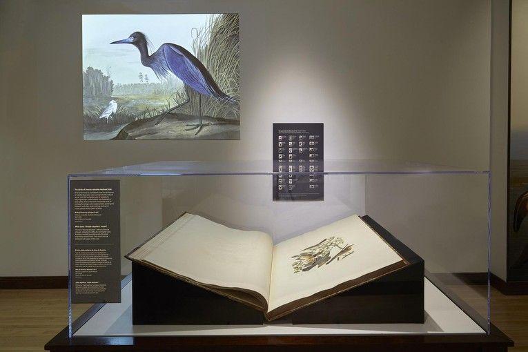 """Pájaros de América"", de John James Audubon"