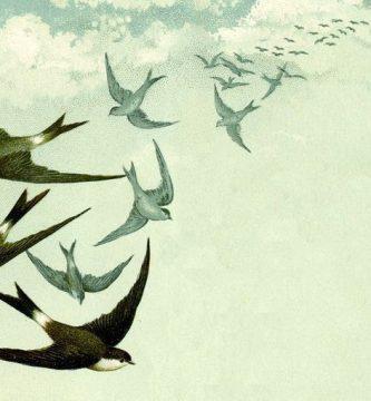 Los murciélagos no se posan, por María José Fra