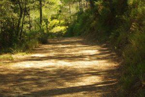 La senda de los poetas, por Vicente Adelantado Soriano